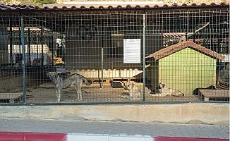Büyükşehir, On Ayda 1500 Kedi ve 2 Bin Köpeği İyileştirdi