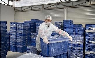 Marek, Ekmek Üretiminden Hijyeni Elden Bırakmıyor