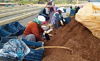 300 Bin Tohum Toprakla Buluşturuldu