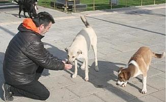 Erdemli'de Sokak Hayvanları Unutulmadı