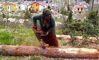 Orman İşçileri Devrilen Ağaçları Ekonomiye Kazandırmak İçin Çalışıyor