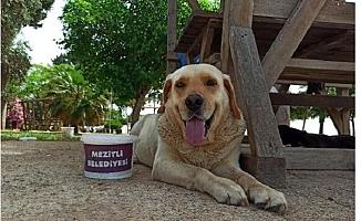 Mersin'de Hayvanseverlerden Sokak Hayvanları İçin Duyarlılık Çağrısı Yaptı