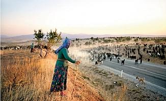 Mersin'de Yaylalara Tek Yönlü Göçe İzin Verildi