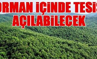 AK Parti, Orman Yasası'nda Değişiklik Yapıyor