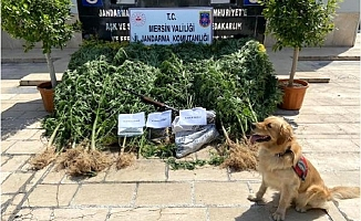 Erdemli'de 1,5 Kilo Kubar Esrar Ele Geçirildi