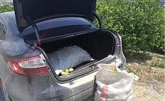 Limon'unu Satma Derdinde Olan Üreticiye Şimdide Hırsızlar Dadandı.