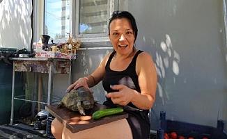 Tek Ayağı Olmayan Kaplumbağa'yı Sahiplendiler