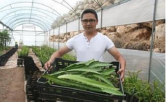 Ne Ejdermiş, Meyvesine Talep Arttı, Şimdi de Çiftçi Fide Siparişlerine Yetişemiyor