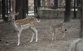 Tarsus Doğa Parkı'nın Ürkek Sakinleri...
