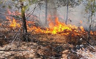 Mersin´de Orman Yangını