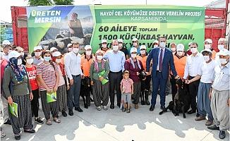 60 Aileye, 1500 Adet Hayvan Desteği, Yem ve Aşıda Büyükşehir'den