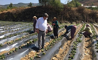 Cengiz Gökçel, Anamur'un Köylerini Ziyaret Etti, Çiftçilerin Sorunlarını Dinledi!
