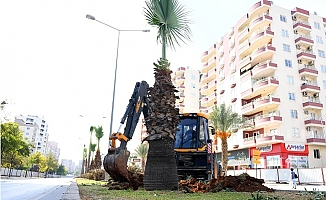 Forum Kavşağında Sökülen Ağaçlar Farklı Noktalara Dikildi.
