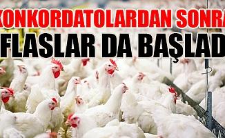 Türkiye'nin Tavukçuluk Devi İflas Etti