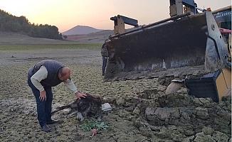 Ayağı Kırık Bataklığa Saplanmış Eşeği Tarsus'ta Belediye Kurtardı.