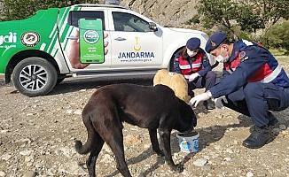 Jandarma, Kısıtlamada Sokak Hayvanlarını Unutmadı