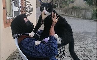 Kedisini Sevdiğinde Fark Etti. Soluğu Jandarmada Aldı