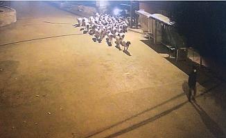 Mersin'de Hayvanların Dışkılarını Takip Ederek Hırsızları Yakaladılar