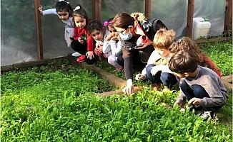 Mezitli'deki Çocuklar Yetiştirdikleri Ürünlerin İlk Hasadını Yaptı