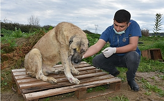 Silahla Yaralanan Köpeğin Durumu İyiye Gidiyor