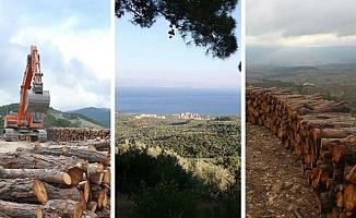 Ormanları ve Yaban Hayatı Yıkacak Yönetmeliğe Durdurun Çağrısı