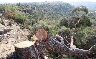 """""""Ormanlar Endüstrinin Kurbanı Oluyor"""""""