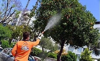Büyükşehir Akdeniz Meyve Sineği İle Mücadele Ediyor