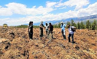 Mut'da Kızılçam Sahalarında Toprak İşlemesi Start Aldı.