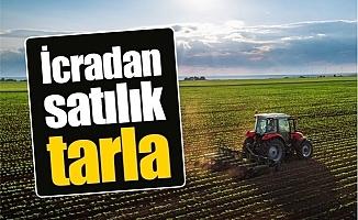 Erdemli'de 6 Bin 228 Metrekare Tarım Arazisi İcradan Satılıyor.