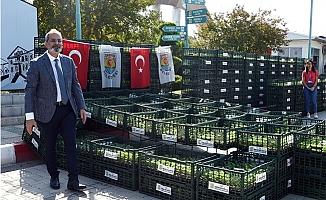 Tarsus Belediyesi Çiftçilere 500 Bin Adet Karnabahar, Karnabahar ve Brokoli Dağıttı.