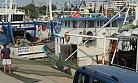 Mersin Balıkçıları Sezona Hazırlanıyor