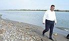Mersin Sahillerindeki Balık Ölümlerinin Nedeni Tahliller Sonucunda Belli Olcak
