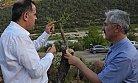 Mersin'de 119.050 Yaban Ağacı Aşılandı