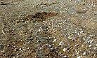 Mersin'de Hırsızlar Yeni Dikilen Zeytin Fidanlarını Çaldı