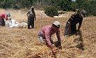 Mersin'de Kırsal Kesimde Hasat Başladı