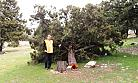 Mut İlçesinde Ağaç Kıyımı