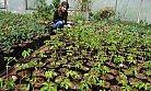 Silifke Belediye Yılda 150 Bin Adet Çiçek Üretiyor