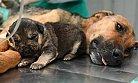 Trafik Kazasında Yaralanan Köpeğe Takdirlik Müdahale