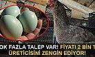 Yeşil Yumurtaya Talep Giderek Artıyor