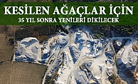 Mersin'de Taş Ocağı İçin 3 Bin Ağaç Kesilecek