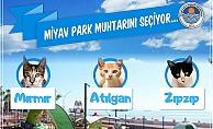 Dünyanın İlk Kedi Muhtarı Mersin'den Çıktı