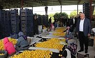 Erdemli Belediyesi, Limonata Fabrikası Kurmak İçin Çalışma Yapacak