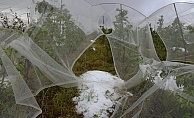 Erdemli'de Dolu Yağışı Bin Dönüm Tarım Arazisine Zarar Verdi.