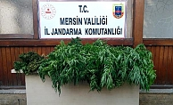 Mersin'de Bahçıvan Olarak Çalıştığı Villanın Bahçesine Kenevir Eken Şüpheli Tutuklandı
