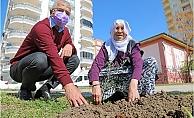 Mezitli'de Şiddet Sonucu Hayatını Kaybeden Kadınların Anısına Zeytin Fidanı Dikildi.