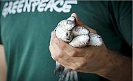 Mersin'de İki Balıktan Birinin Midesinde Mikroplastik Var