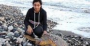 Hayvanseverlerin Seferber Olduğu Caretta Caretta Öldü
