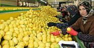 Limon Altın Çağını Yaşıyor