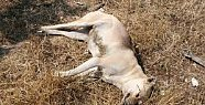 Mersin'de 23 Köpeğin Zehirlenerek İtlaf Edildi.