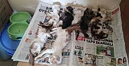 Mersin'de Barınakta Hayvan Ölümleri